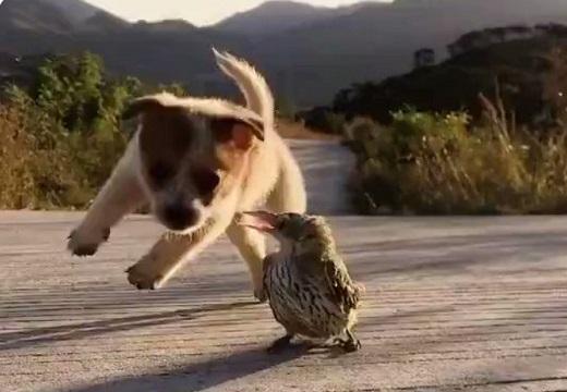 【動画】興奮しまくる子犬と、全く動じない鳥が話題「何度も見てるw」