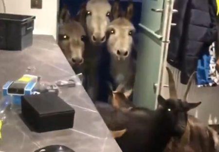 【w】部屋に上がりこんだたくさんの動物たちと大笑いしてる主さんの動画が話題