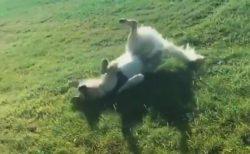 【w】滑って遊ぶのが大好きな犬の動画が話題「無限に見ていられる」