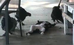 【でーん】警戒心ゼロで爆睡する猫が話題w