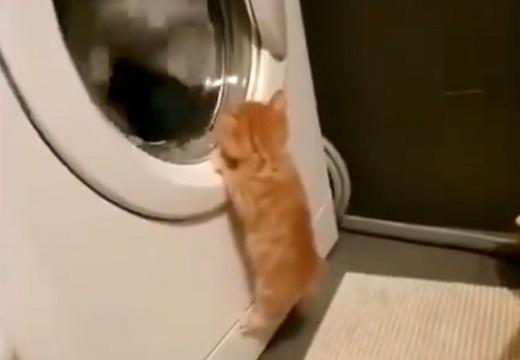 【動画】ドラム式洗濯機に興味津々の子猫が話題「最後カワイイすぎるw」