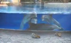 【動画】野性のリスに興味津々のイルカ達が話題w
