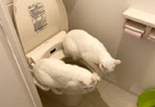【便座w】猫さん、温かい場所を見つける天才的能力が話題に