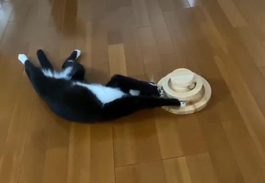 【動画】藤あや子さんちの保護猫くん、幸せぶりがスゴイw