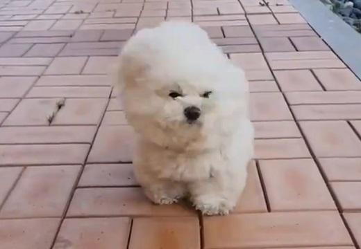 【動画】強風に立ち向かう犬が話題に「すごくがんばってるw」
