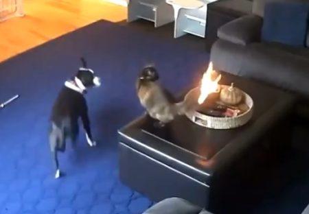 【!】猫のしっぽに引火!犬と猫の反応が話題に「犬がびびってる」「熱くないの?!」