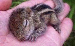 【ちっさ】手の上で眠るリスの赤ちゃんが話題「初めて見た」「めっちゃくちゃ可愛い!」