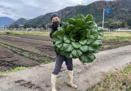 【凄い】「今シーズン最大の小松菜、捕獲!」→驚きの巨大さにネット騒然w