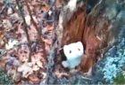 【動画】野生の獣の狩りに興奮した犬くん!靴下を相手に真似する姿が話題にw