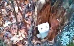 【こそっ】木の中から顔を出すオコジョがめちゃくちゃ可愛い!