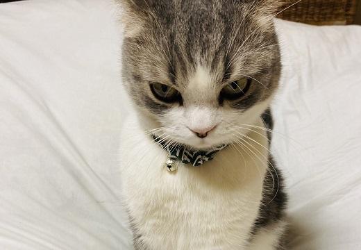 【可愛すぎw】クローゼットに閉じ込められお怒りの猫さんが話題に(・∀・)