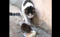 【動画】気が強いねずみと気が弱い猫が話題に「トムとジェリーみたいw」
