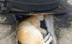 【爆笑】暖かさが残る灰に顔を突っ込んでた猫さん、お顔がヒドイ事にw