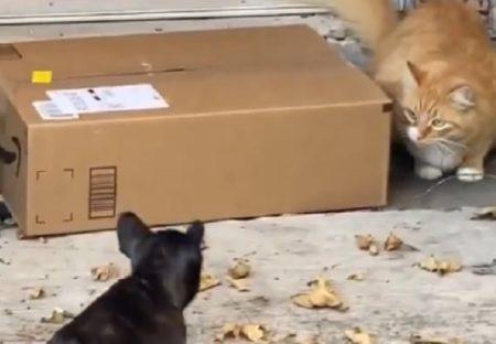 【犬と猫】玄関の置き配を守る子と略奪したい子、攻防が可愛いすぎるw
