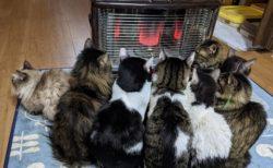 【密】ストーブの前に集合する猫達が話題に「可愛いすぎる!」