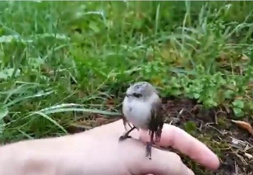【動画】人懐っこい鳥の赤ちゃんが話題に「羨ましい!」「感動‥」