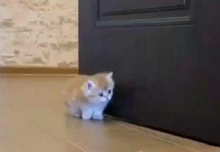【子猫3匹】兄弟を驚かそうと陰から近づく子猫。まさかの展開にw
