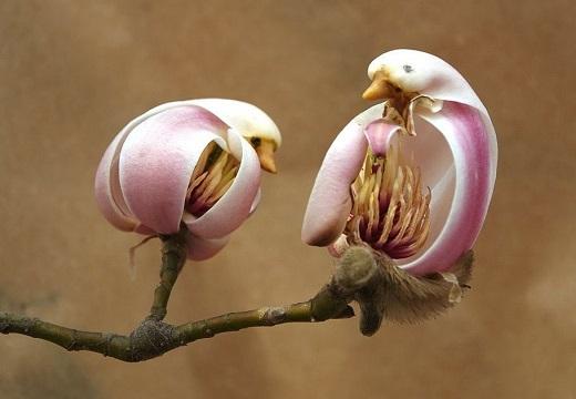 【かわいい】鳥にそっくりの花を咲かすモクレンが話題に