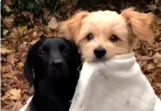 【動画】犬2匹の撮影風景が話題に「何回も見てる」「可愛いすぎw」
