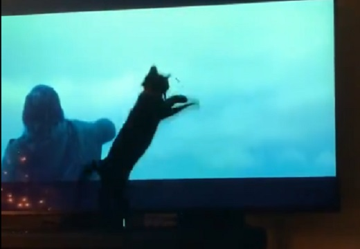 【動画】テレビの映像に反応する猫ちゃんが話題にw