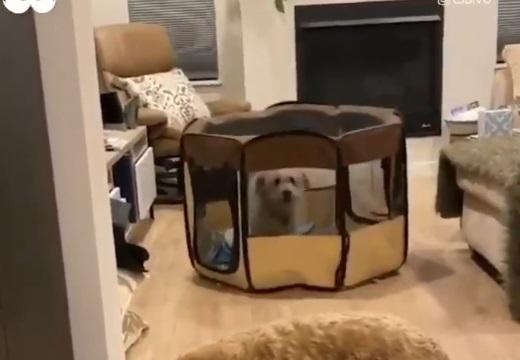 【動画】ケージに入れられた犬、ケージごと移動する方法をあみだす!!!
