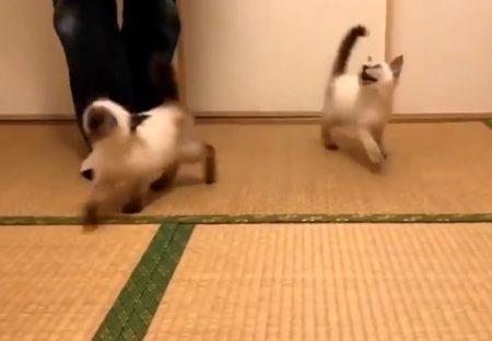 【動画】子猫の兄弟、想像以上に激しい食事風景が話題に「声出たw」