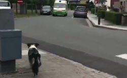 【愛】いつものアイス屋さんを待つ犬と、凄いタトゥーのおじさん。ほっこり動画が話題