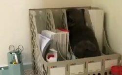 【動画】病院でそそくさと隠れる猫が話題に「しっぽまですっぽりw」