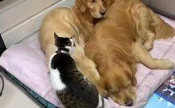 【密】いちばん暖かい場所に入り込む猫が話題に「犬もやさしい!」