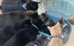 【動画】新入りの子猫に興味津々の先輩猫達が話題に「大歓迎w」