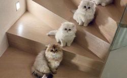 【ねこ画像】家族5匹、階段に並んでこっち見てる様子が可愛いすぎるw