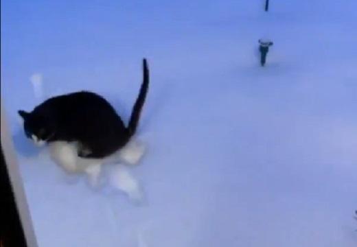 【爆笑】散歩しようとした猫、雪を踏んで3秒で帰宅w