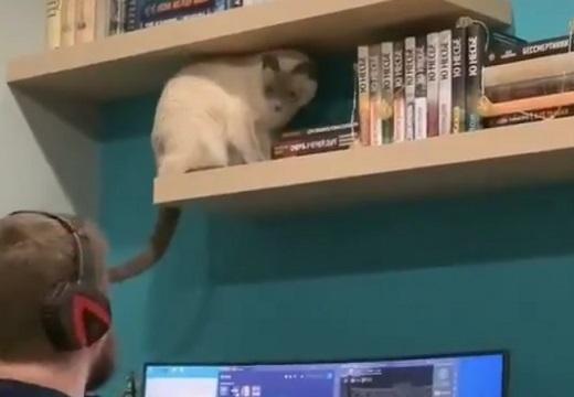 【わざと】リモートワークを邪魔する猫が話題に「かまってちゃんw」