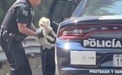 【迷子】警察に保護された犬、家族と再会した場面が感動的
