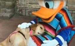 【泣いた】ドナルドに甘えた介助犬、ものすごい笑顔に