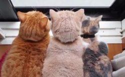 【ほっこり】猫が三密になるまでの過程が可愛いすぎるw