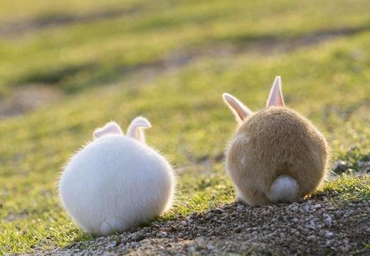 【うさぎ5羽】後ろ姿がたまらなく可愛いウサギが話題に