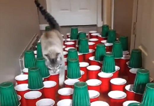 【w】器用な猫と不器用な猫が話題に「最後の子が最高w」「今年で一番笑った!」