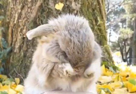 【むにむに】ウサギが両手で顔のお手入れする様子、可愛いすぎるw