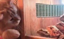 【w】ねこ vs 爬虫類集団!びびりまくる猫が話題に「どっちも可愛い!」