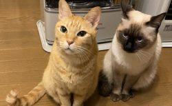 【w】近づきすぎたストーブを消されてしまった猫達の表情が話題に