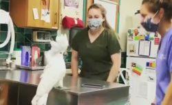 【動画】病院で看護婦さん達とノリノリのオウムが話題に「楽しそうw」
