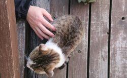【ねこ】ずっと引きこもりだった男性、庭を訪ねてくる野良猫で人生が変わる