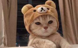 【眠そうw】最強に可愛い!リラックマをかぶった猫が話題に