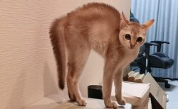 【w】犬を威嚇する子猫が話題に「カワイイw」