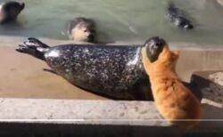 【!】右頬に猫パンチされたアザラシ、驚きの行動に!「絶妙な間が最高w」