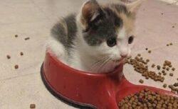 【ちょこん】水入れの方に座っちゃってる子猫が話題に「可愛すぎるw」
