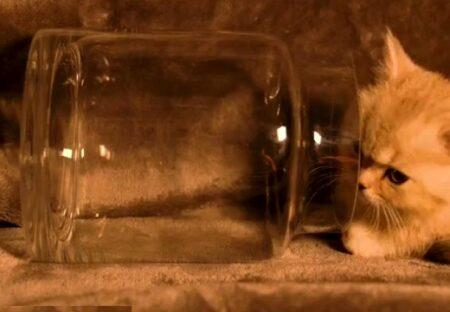 【動画】小さな瓶にすっぽり入ってしまう子猫が可愛いすぎるw