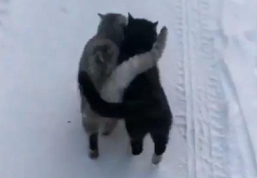 【寒くて‥】ぴったり寄り添って雪道を歩く猫達が話題に「シッポが最高w」