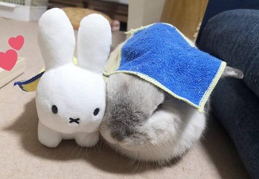 【ふわふわ】置いてあったぬいぐるみにくっつき眠るウサギ。可愛いすぎるw